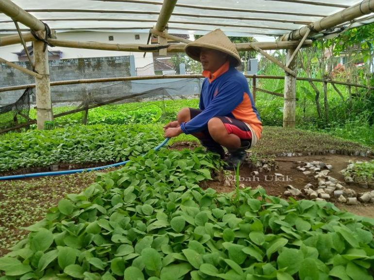Usaha Pembibitan Tanaman Sayur, Profesi Langka Halaman 1 ...