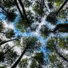 Mengenal Brubuh, Kearifan Masyarakat Jawa dalam Menjaga Hutan