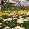 Mengadu Nasib kepada Bunga Hias, Bertahan dengan Hasil 25%