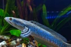 Beli Ikan Hias Online Aman Nggak, Ya? Berikut Tipsnya