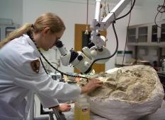 Mengoptimalkan Laboratorium dalam Riset Arkeologi di Indonesia