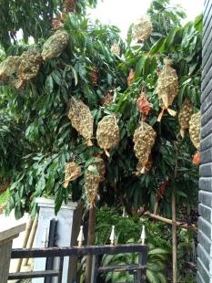Kisah Pohon Kelengkeng Kami