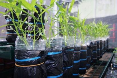Membuat Kebun Hidroponik Menggunakan Botol Bekas Air Mineral