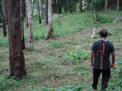Jahe, Sengon, dan Bapak: Membendung Budaya Latar Baru dari Kampung Naidewa