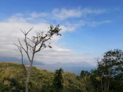 Misteri Cinta Segitiga Kota Pancasila dan Dahan-dahan Ranggas