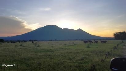 Pesona Padang Rumput Sabana