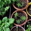 Urban Farming sebagai Caraku untuk Hidup Sehat Sambil Menjaga Lingkungan