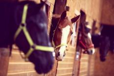 4.200 Tahun Domestikasi Kuda yang Mengubah Peradaban Manusia