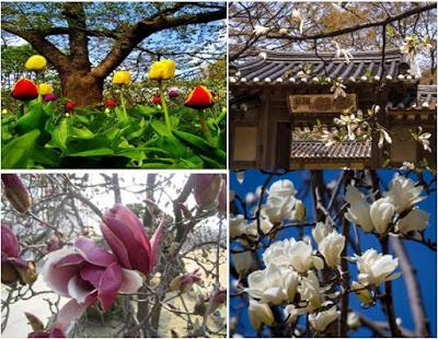 Bunga-bunga Indah saat Musim Semi di Korea