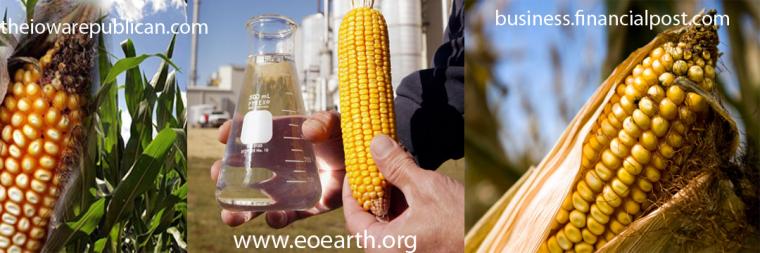 Bensin Dari Jagung Sebagai Alternatif Sumber Energi Masa