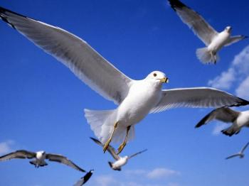 Download 430+ Foto Gambar Burung Sedang Terbang  Paling Keren Free