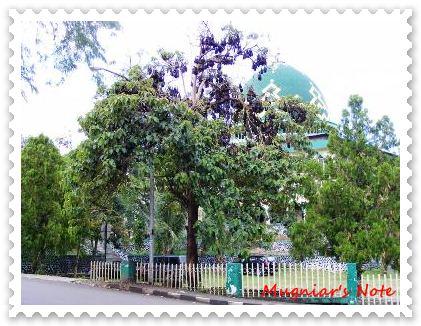 Kota Kalong (Kota Soppeng)
