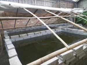 Kolam Tako: Pelihara Lele Hemat Air di Lahan Pekarangan