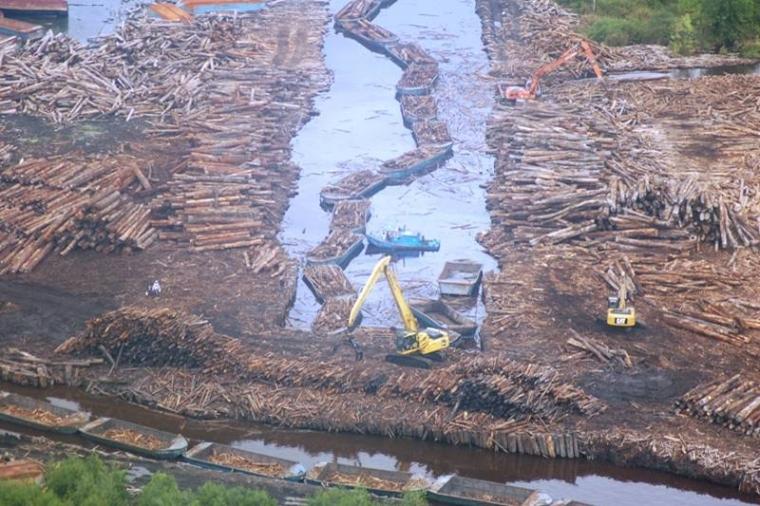 Pembangunan Pabrik PT. OKI Pulp and Paper Mills ; Ancaman bagi Hutan Indonesia dan keselamatan Rakyat
