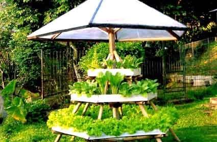 Berkebun Sayur Di Pekarangan Rumah