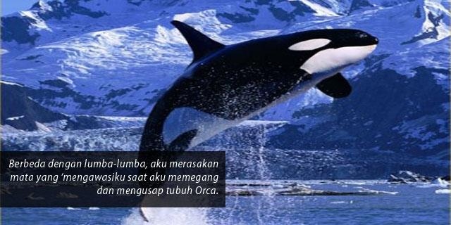 Orca: 'Killer Whale' yang Penyayang dan Tidak Pernah Mengganggu Manusia
