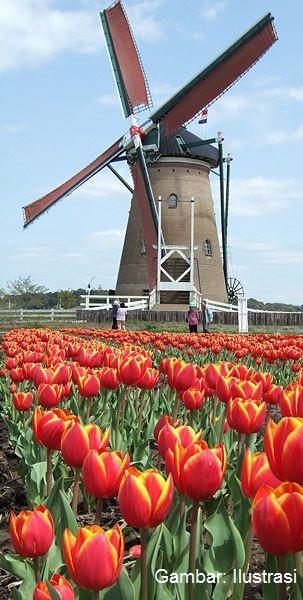 Maluku Belanda Vs Jawa Suriname