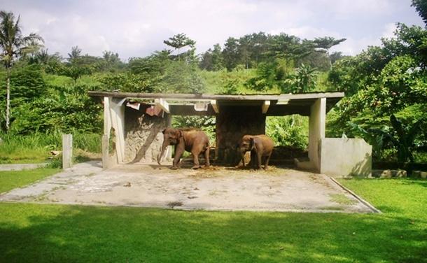Kematian Gajah di TRMS Serulingmas Banjarnegara