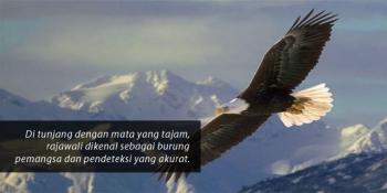 62 Gambar Regu Elang Jawa
