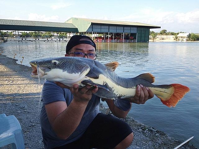 Mancing Monster Fish di Malaysia, Sensasi Luar Biasa
