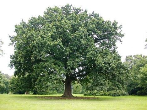 Pohon Kalpataru Bukan Sekedar Mithos Oleh Anastasia Widiyanti