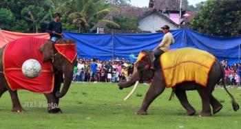 Alasan Kenapa Sepak Bola Gajah Pss Sleman Dan Psis Semarang
