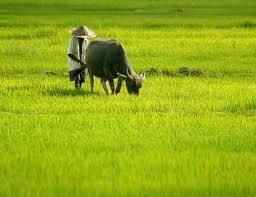 Masih Layakah Kita Disebut Sebagai Negara Agraris