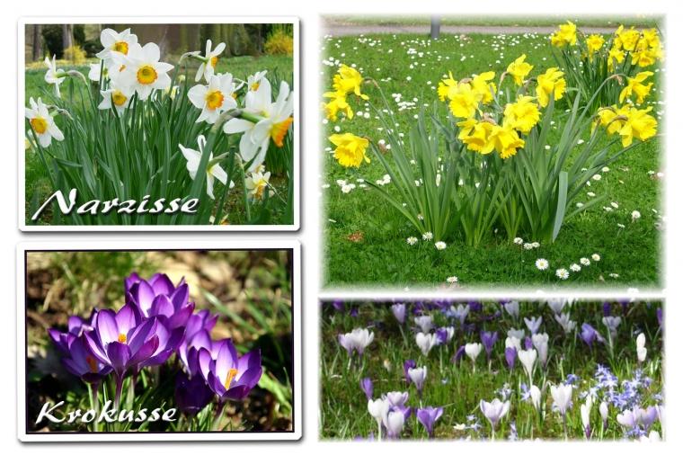 Frühlings Blumen (I)