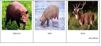 87+ Gambar Babi Rusa
