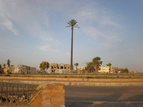 Di Mesir, Tower BTS Berbentuk Pohon Kurma