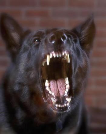Mengapa Anjing Marah? - Kompasiana com