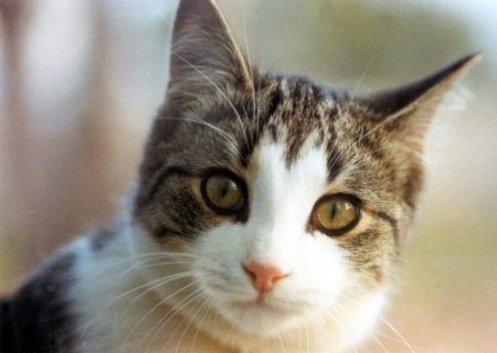 Kucing Bisa Berbicara