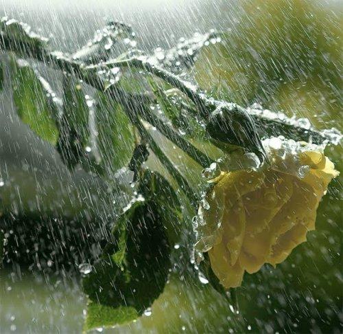 antara realita bunga dan hujan com