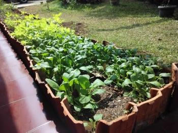 5 Langkah Super Mudah Bertani Di Halaman Rumah Dengan