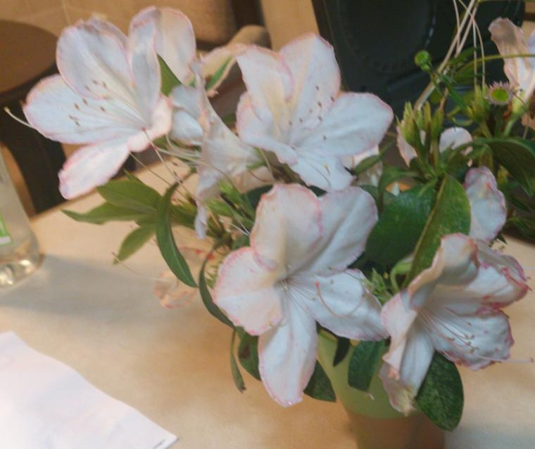 Tahukah Anda Cara Mewarnai Bunga Dengan Sangat Mudah Oleh Roselina