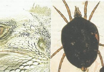 57 Gambar Rangka Hewan Reptil Gratis